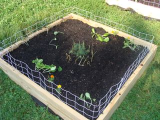 Squash garden day one