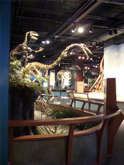 Dinosaur exhibit at mcwane