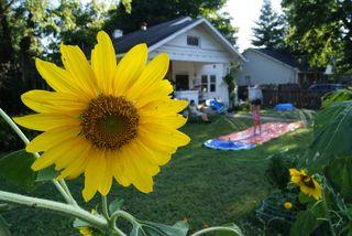 Sunflower with slip-n-slide