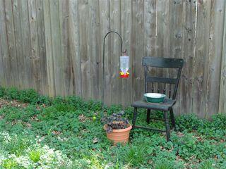Pocket hummingbird garden