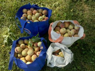 Bags of peaches