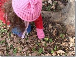picking up twigs