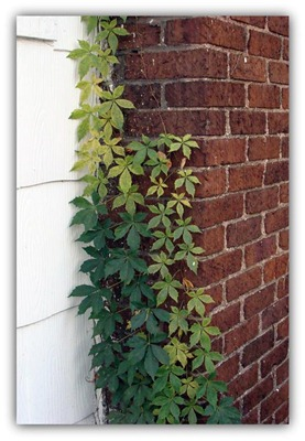 green vines with drop shadow