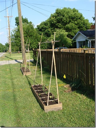 garden boxes planted and with trellis frame (Medium)