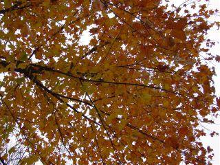 November_tree